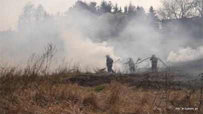 Pożar trawy przy ulicy Spadzistej w Luboniu