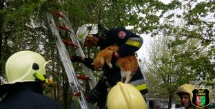 Pomoc pogotowiu i kot na drzewie [filmik]