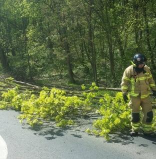 Łęczyca – Powalone drzewo na drodze