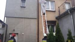 Gniazdo szerszeni przy ulicy Spokojnej