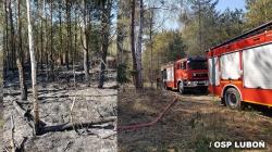 Dwa poniedziałkowe pożary lasów