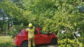 Konar drzewa spadł na samochód