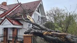 Powalone drzewo na budynek
